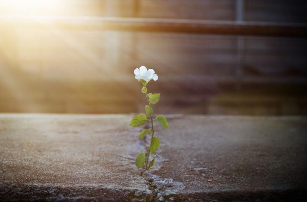 success-requires-perseverance
